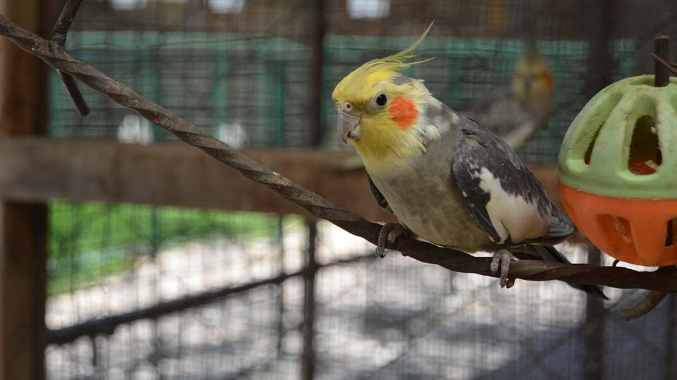 Stedmak Animal Park