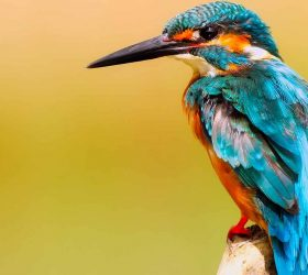 Birding Experience